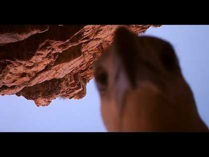 #Eagle stole camera near crocodile meat trap