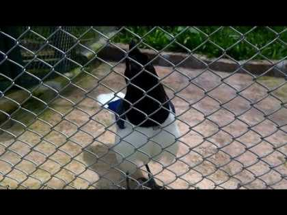 Watch This Bird And Listen How It Talks Like A Computer Game... #Awesome!