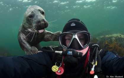 #Funny Seal #Photobomb