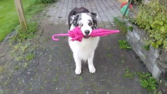 Doggy Umbrella Dance Move