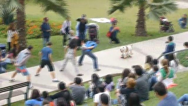 Dog skates between people's legs