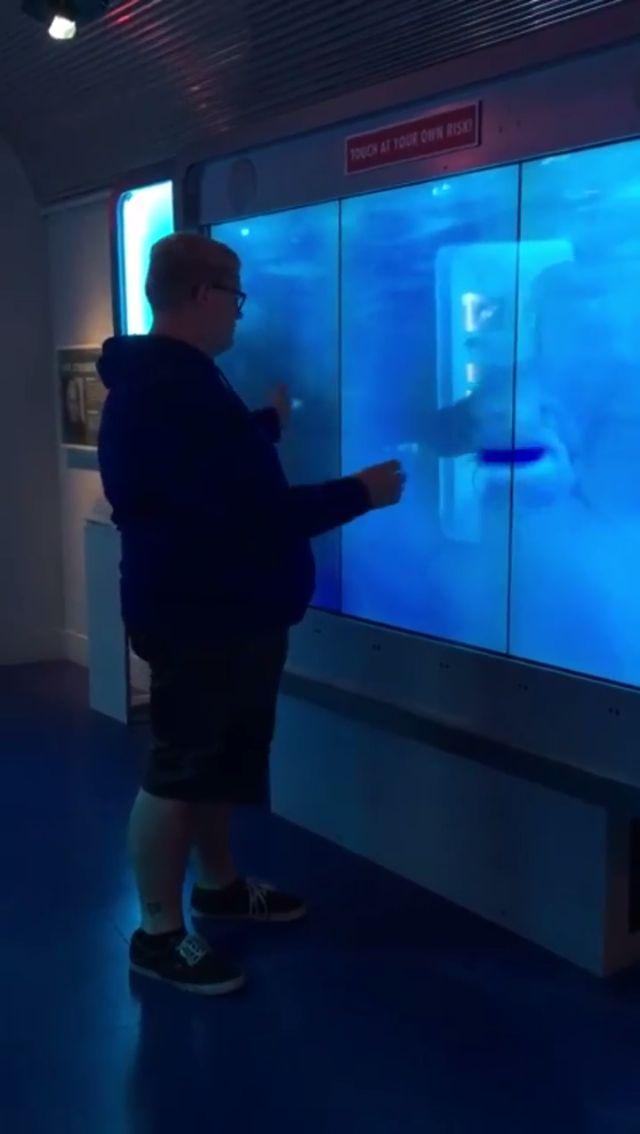 Shark Screen at Spy Museum DC