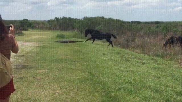 A horse stomps on an alligator in Florida... 🐎 + 🐊 = 📸