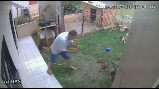 This guy blew up his whole backyard trying to kill a tiny bug 🤣 #funny #wtf