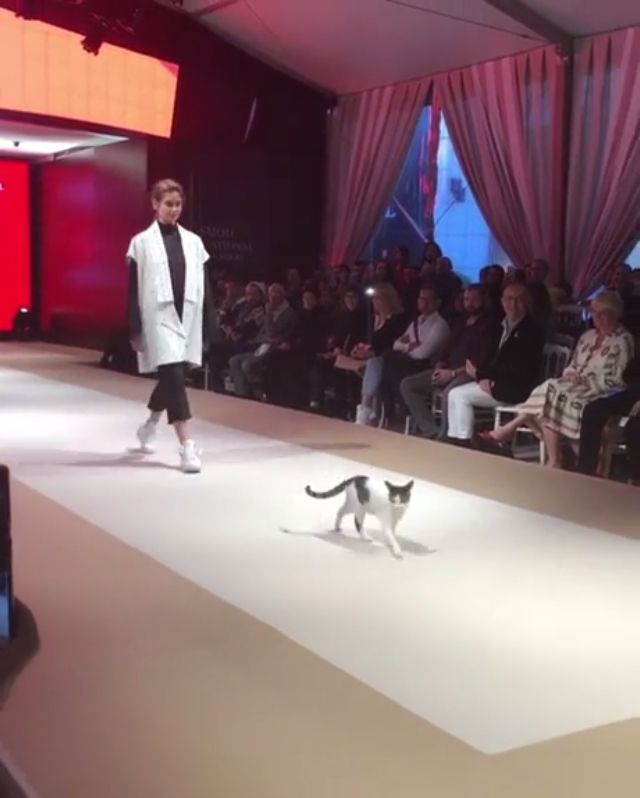 A real cat does the #catwalk at #Istanbul #fashion show